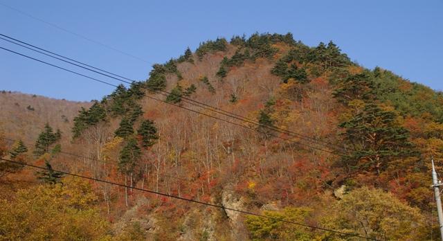 栗子の紅葉