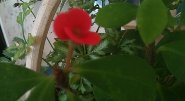 支援センターの花