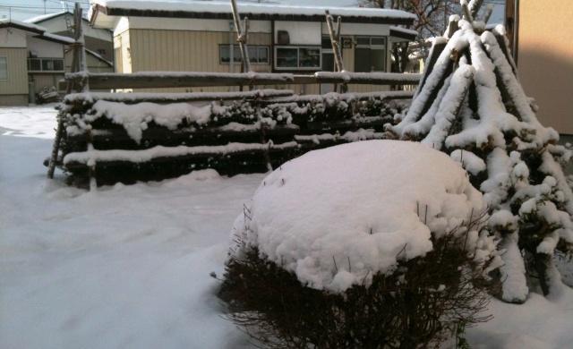 23日の雪の様子