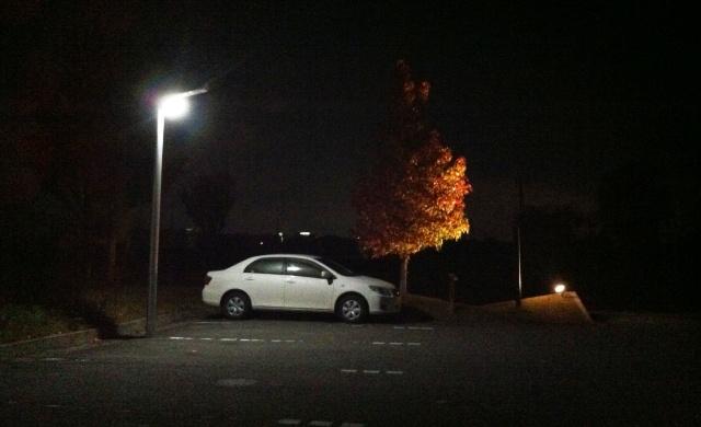 夜の紅葉ライトアップ