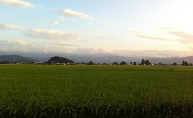 田んぼの光景