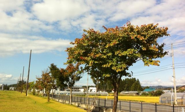 これって秋だよね